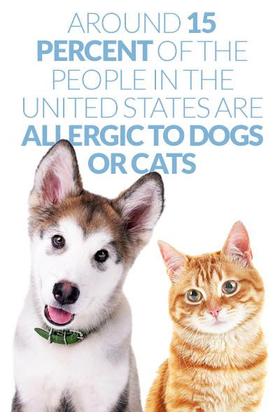Dog or cat allergies
