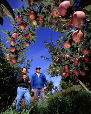 Orchard Runoff Is Still Primary Sources of Arsenic Exposure