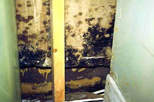 Mold Faq What Is Black