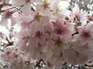 Block Spring Pollen