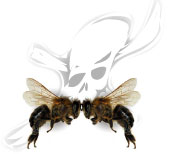 Stinging Insect Allergy & Anaphylaxis