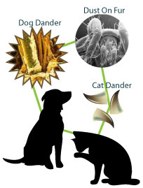 Keep Your Pet - Get Rid of the Pet Dander