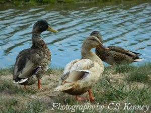 Ducks Are Always Up For Bath Time!