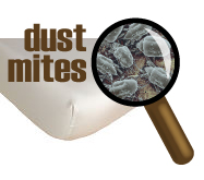 Get Rid of Dust Mites with Steam Cleaning