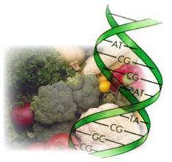 Genetic Engineering & Food Allergies