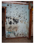 Mold: The Fungus Among Us