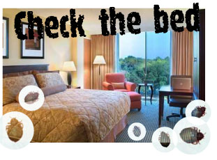 Check for Bed Bugs