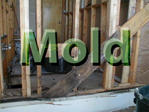Mold FAQ - How Do I Spot Mold and Get Rid of It?