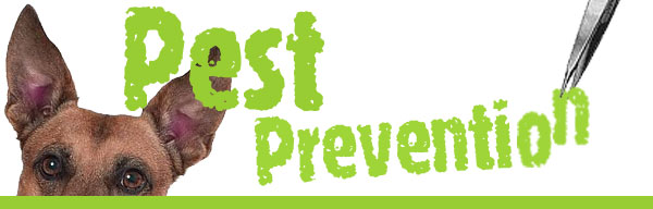 Remove and Prevent Ticks and Fleas from Your Pets and Home