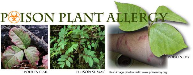 Toxicodendron Dermatitis: Poison Plant Allergy