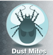 Keep dust mites in check with dehumidifiers