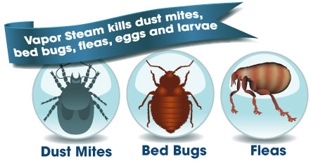 Vapor Steam Kills Dust Mites, Fleas and Bed Bugs
