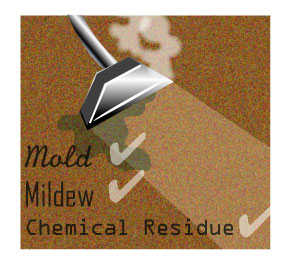 Mold Mildew from Wet Carpet Cleaning